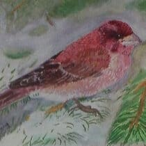 Brian McInnerney Purple Finch Oil